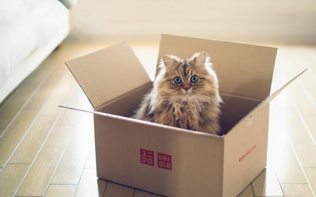kitty-box