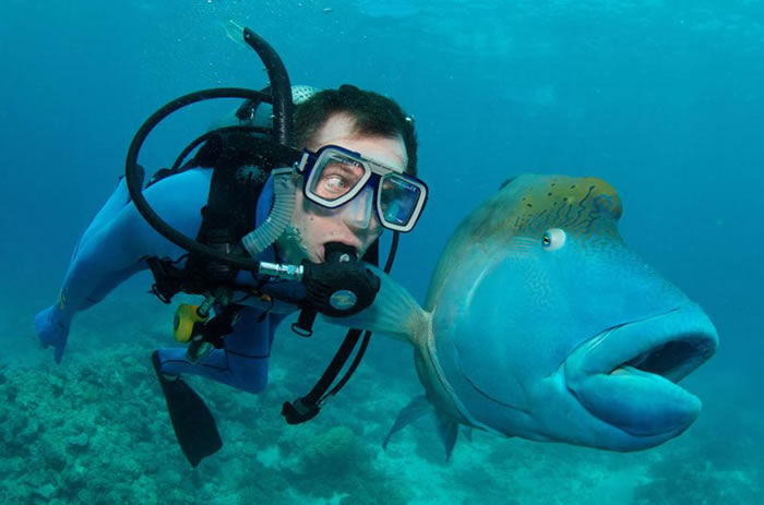 fish-and-scuba-diver-funny-priceless-expression