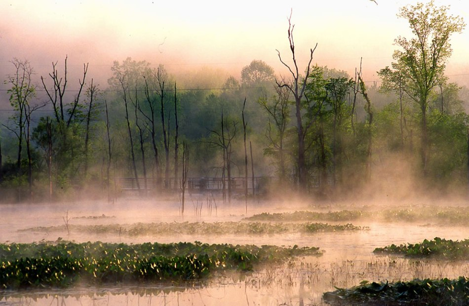 Beaver-Marsh-in-morning-mist