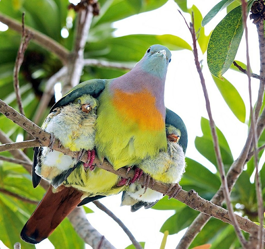 birds-mother-babies