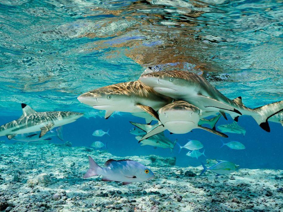 blacktip-bluefin-twinspot-underwater_82983_990x742